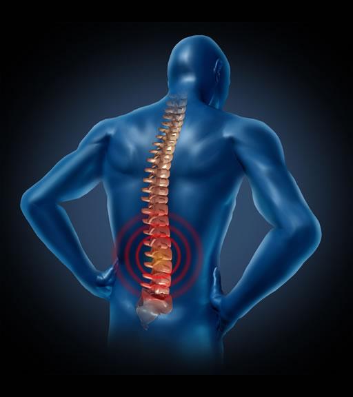 La colonna vertebrale: sai come dovrebbe funzionare?